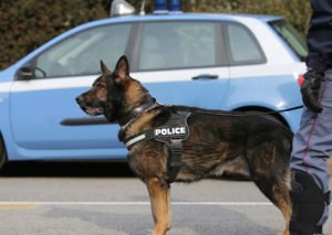 Officers Cannot Detain You to Wait for a Drug Sniffing Dog